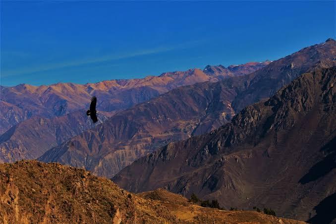 Peru un mundo de vida salvaje