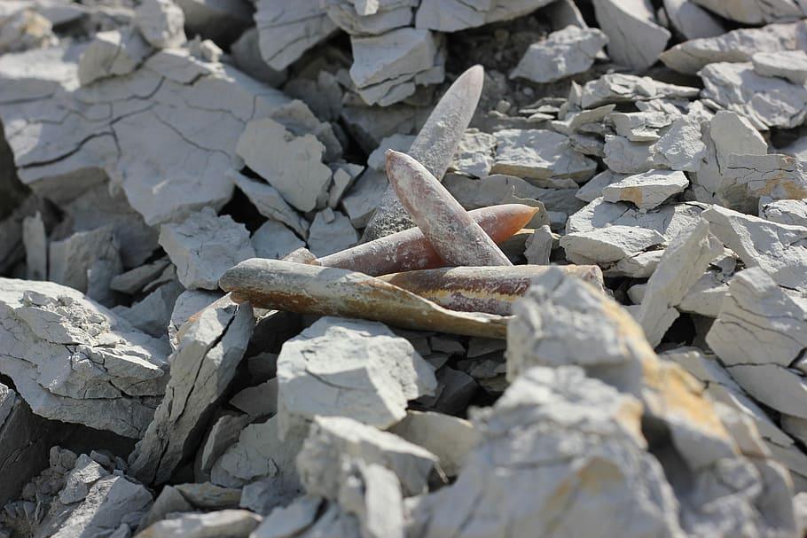 El Gran Cañón está lleno de fósiles