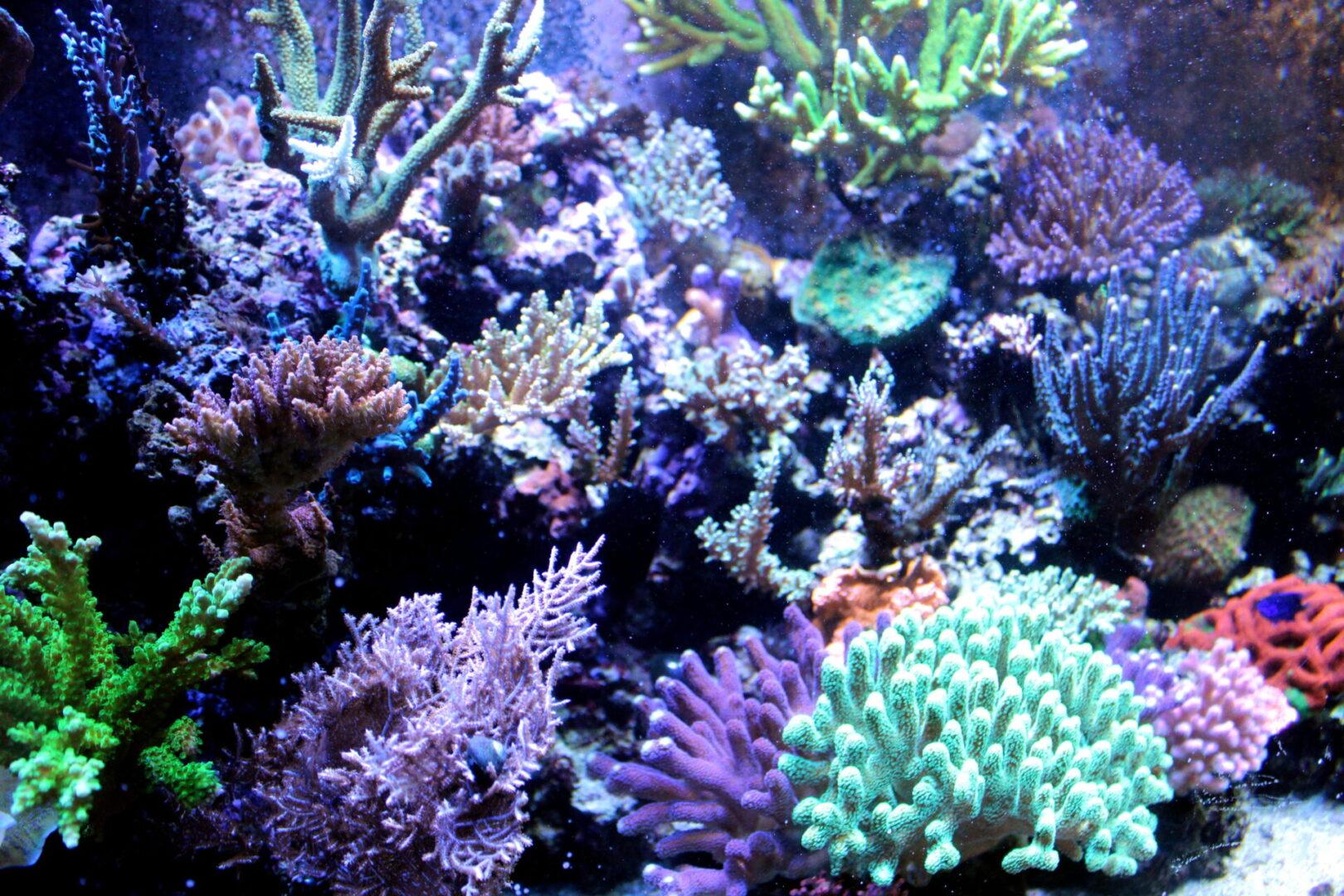 Arrecifes del Parque Nacional Cahuita