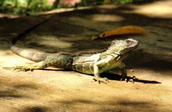 Cómo pasar 24 horas en el Parque Nacional Tortuguero