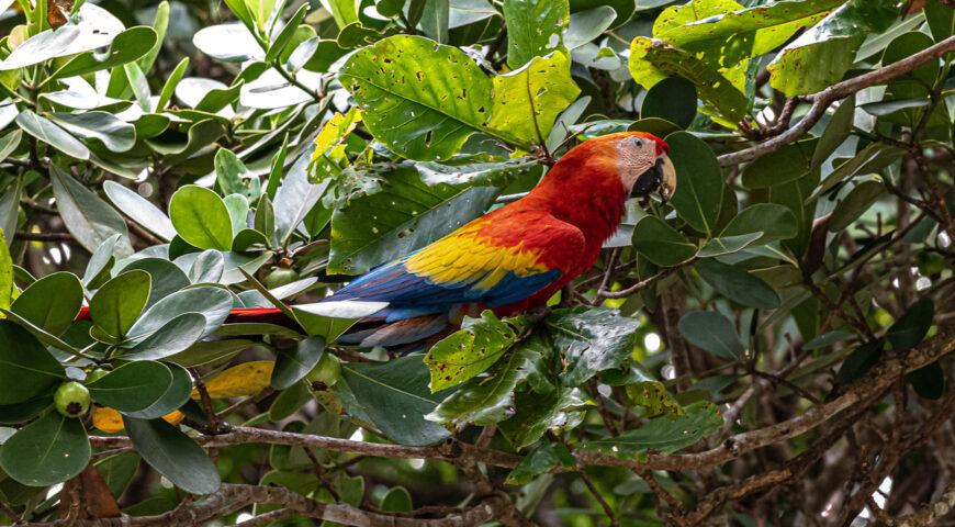 Qué saber sobre los diferentes ecosistemas que tiene Costa Rica
